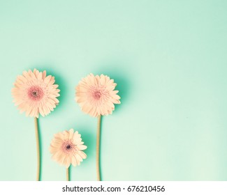 Pink daisies over mint on a flat lay composition