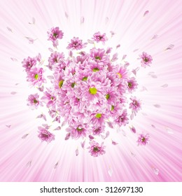 pink daisy flower buds and petals explosion