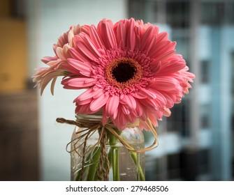 Pink Daisy Flower in Mason Jar