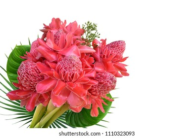 Pink Dala flowers cut together on a white background.