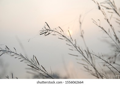 Pink dawn, the sun covered with fog, graphic branches in the foreground