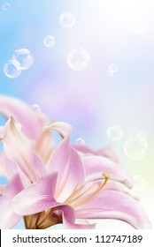 Pink decorative beautiful flowers lily on a blurred abstract blue background