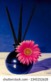 Pink Decorative Daisy in a black vase. Stock Image
