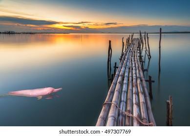 Pink Dolphin swimming in the sea Twilight near Bamboo Bridge.