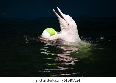 Pink dolphins are catching the ball.