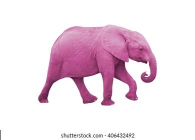 Pink Elephant Isolated on White Background
