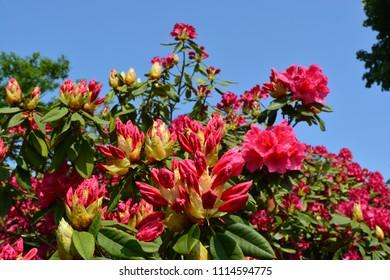 Pink, exotic looking flowers