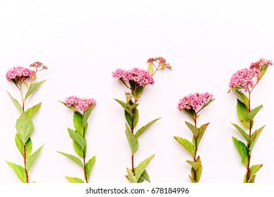 Pink field flowers on the white background. Flat lay, top view