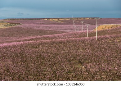 pink fields landscape