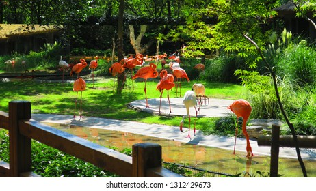 Pink flamigoes in the Zoo