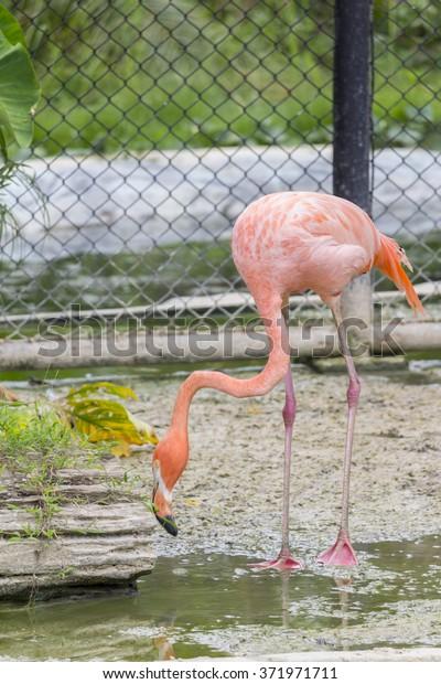 Flamingo Cage