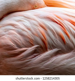 Pink Flamingo Closeup Abstract