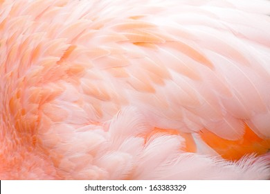 Pink flamingo feather background
