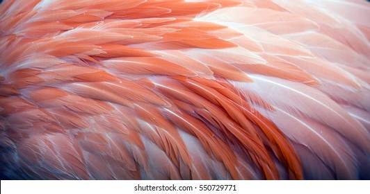 Pink flamingo feather pattern background