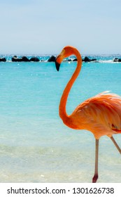 Pink flamingo on the beach from Aruba