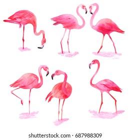 Pink flamingo set. Watercolor.