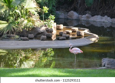 pink flamingo walking on green grass in park