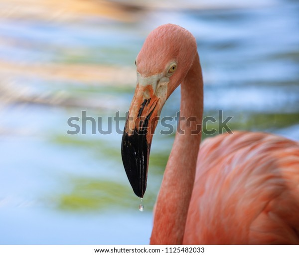 pink flamingo is watching your actions