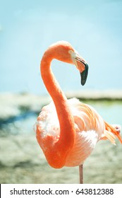 pink flamingo with water background behind