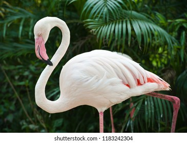 pink flamingo in the zoo