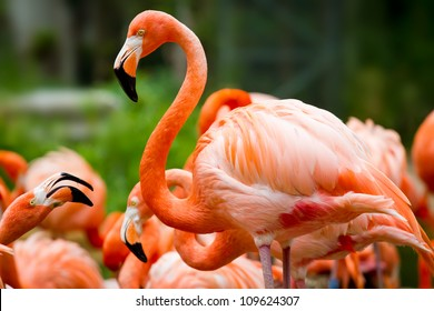 Pink flamingos against green background