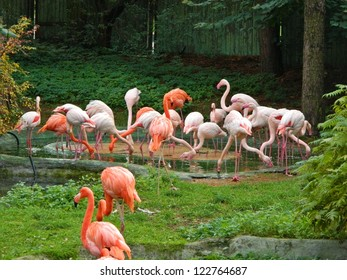 Pink flamingos against green background in Riga zoological garden