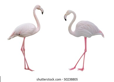 Pink flamingos with clipping path on white background.