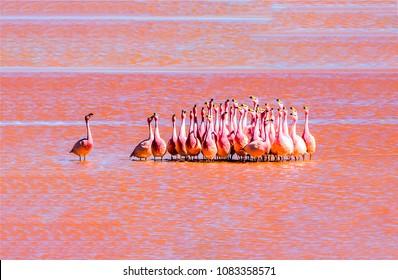 Pink flamingos flock landscape