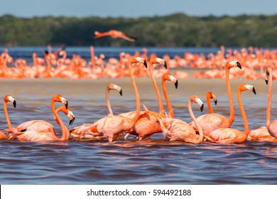 Pink flamingos mexico