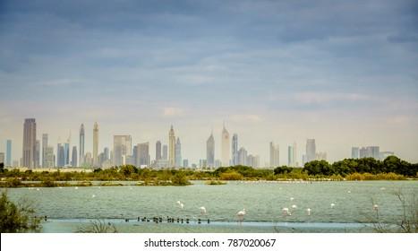 Pink flamingos on a lake in Ras al Khor Wildlife Sanctuary with downtown Dubai skyline in the backdrop