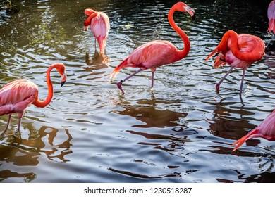 Pink Flamingos and white Ibis in Orlando, Florida
