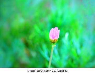pink floer in the green nature background for decorating.