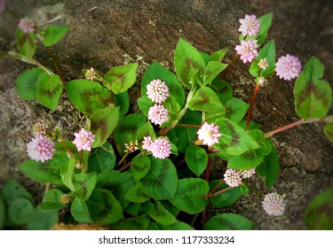 pink floers and green leaves with stone surface background.