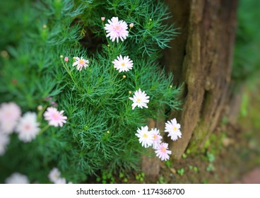 pink floers near the brown tree with green grasses background.