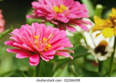 Pink floral  in garden