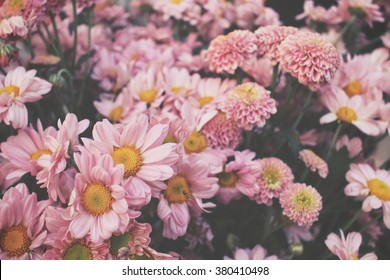Pink flowers images stock photos vectors shutterstock pink flower mightylinksfo