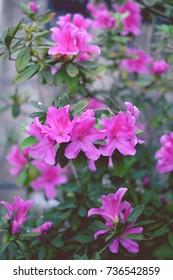 Pink flower - Shutterstock ID 736542859