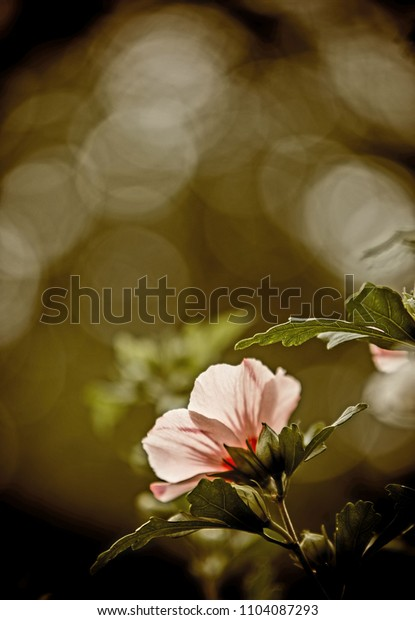 Pink flower against bokeh background