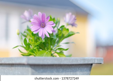 Pink flower in a aluminium pot at the entrance to a yellow building. Bright and fresh