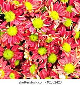 pink flower in background