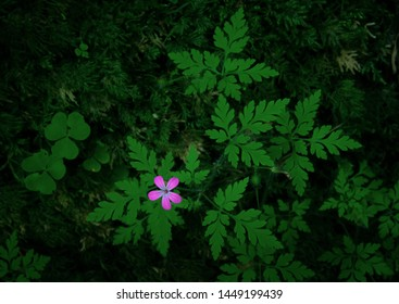 Pink Flower in Beskydy Mountains