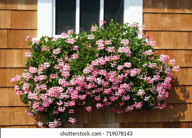 Pink flower blooming on the flower box outside the window