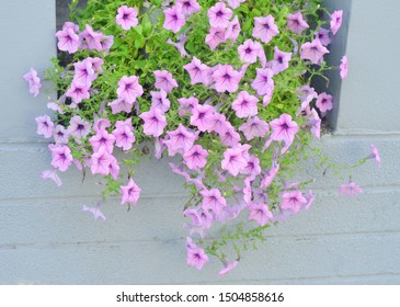 Pink flower blossom for decorate at wall
