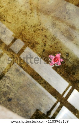 Pink flower blossom floating in water. Spa concept photo. Tranquil photo.