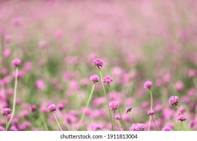 pink flower blossom in garden