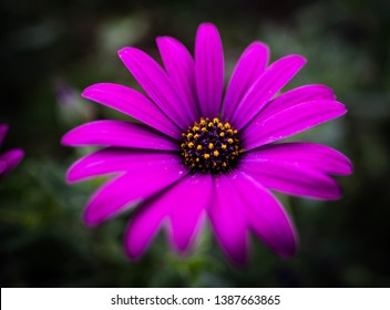 Pink flower blossom in a natural environment.