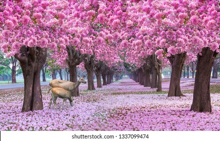 Pink flower blossom romantic tunnel with the group of deer in nature or the name is Pink trumpet tree, blooming with pink color and have some fallen on the ground look like a carpet.