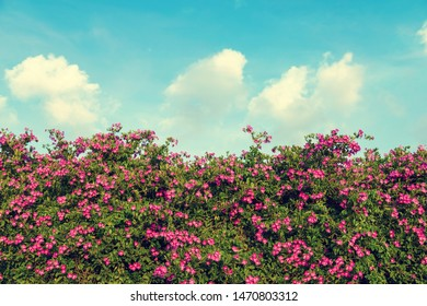 pink flower with blue sky background