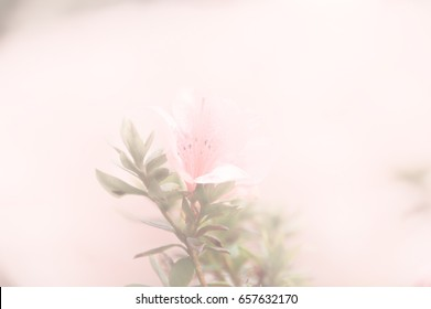 Pink flower with blurred soft image