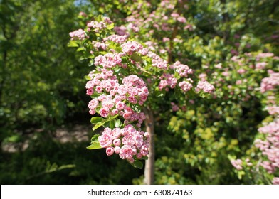 Pink Flower in a Botanical Garden